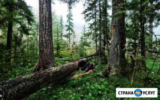 Расчистка участков от кустарника и подлеска Петрозаводск