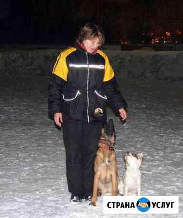 Дрессировка собак Ярославль