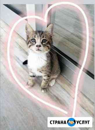 Передержка кошек Омск