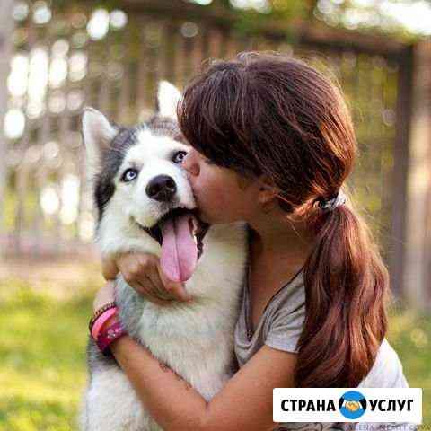 Передержка животных Барнаул