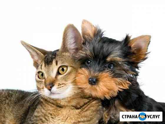Передержка животных Чита
