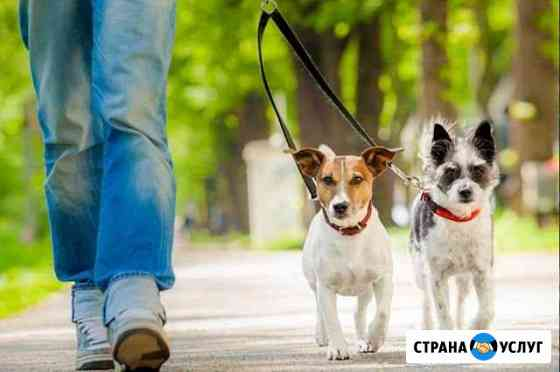Выгул собак Владимир