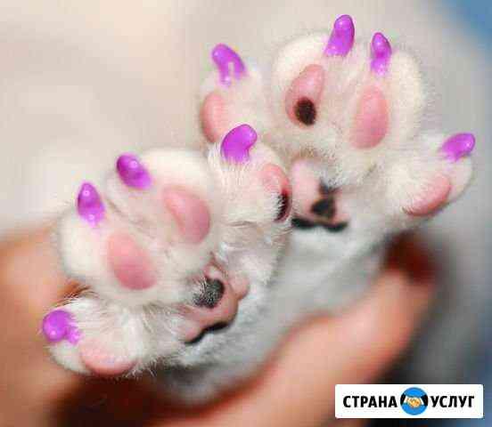 Стрижка декоративных пород собак Вязьма