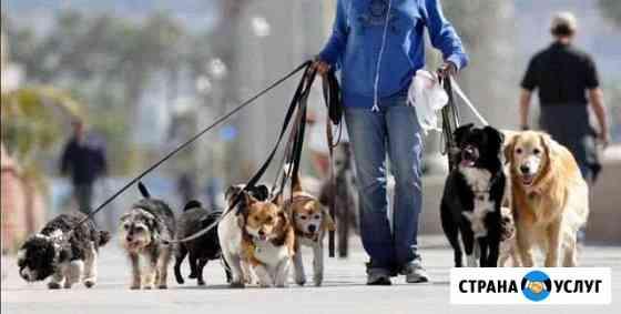 Выгул собак Туртас