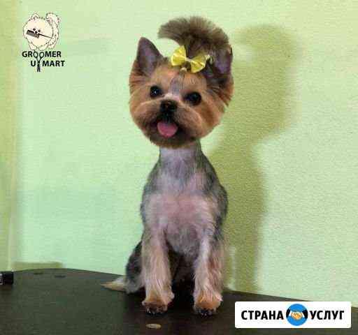 Стрижка собак и кошек Киров