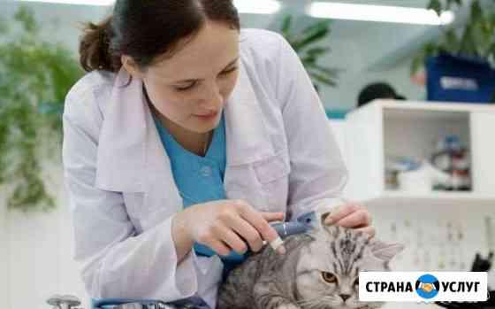 Ветеринарная помощь 24/7 в Удмуртии и в др. регион Ижевск