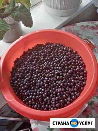 Продаю ягоды Чернику Нижний Новгород