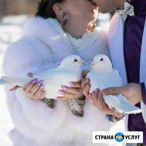 Голуби на свадьбу Тамбов