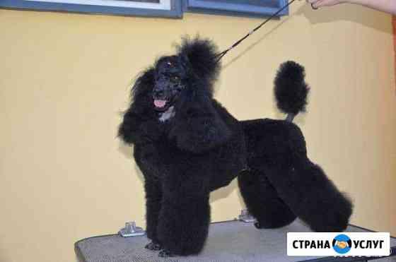 Стрижка декоративных пород собак Александров