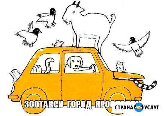 Зоотакси город Ярославль, город Рыбинск Ярославль