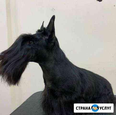 Стрижка собак Калуга