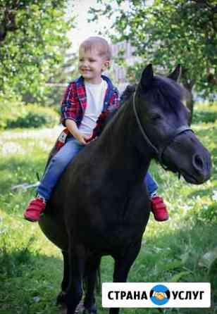 Лошади и пони для фотосессий Махалино