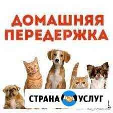 Dog sisters-передержка животных Горно-Алтайск