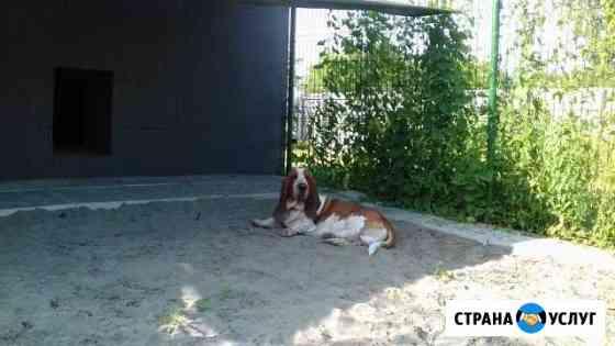 Передержка (Зоогостиница для собак и кошек) Налобиха