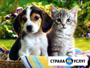 Передержка животных Калининград
