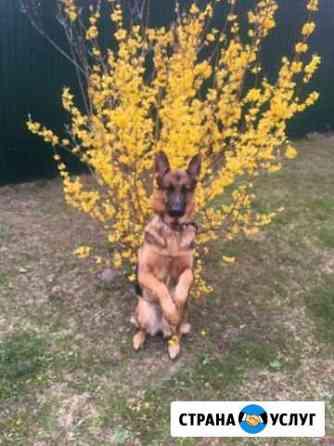 Дрессировка собак Калуга