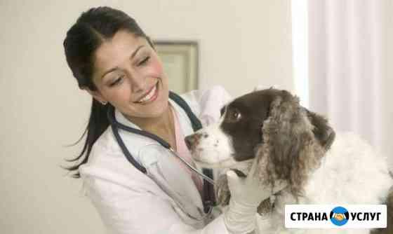 Ветеринарные услуги Иркутск