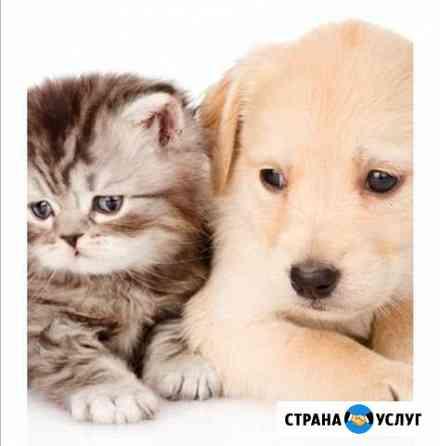 Передержка животных Владимир