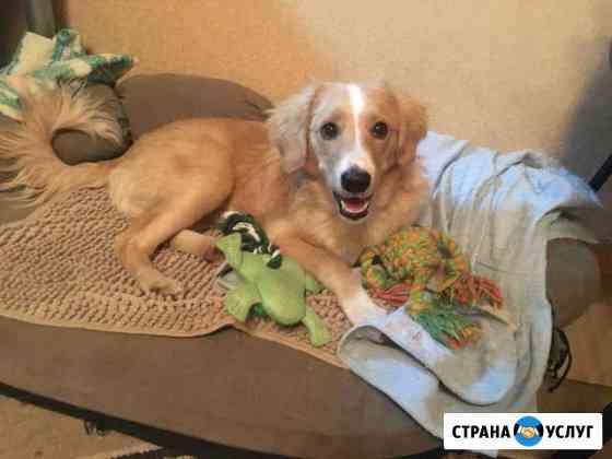 Домашняя передержка для собак Смоленск
