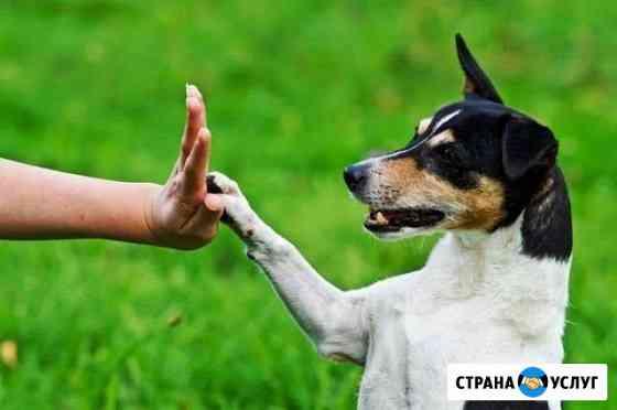 Дрессировка собак, коррекция поведения Иркутск