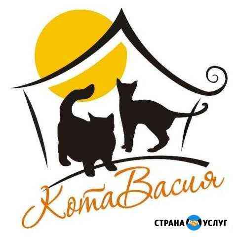 Зоогостиница для кошек котавасия Комсомольск-на-Амуре