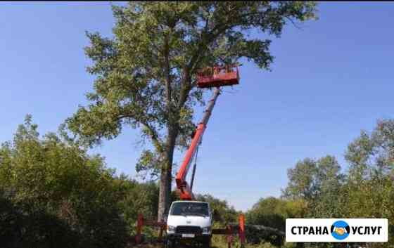 Спил, обрезка,опиловка деревьев Астрахань