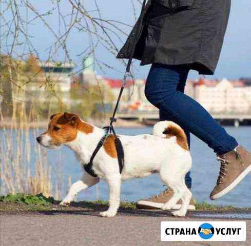 Выгул собак Ижевск