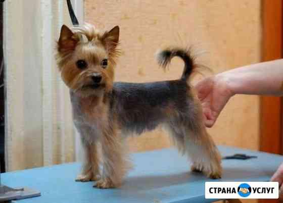 Стрижка собак Кинешма