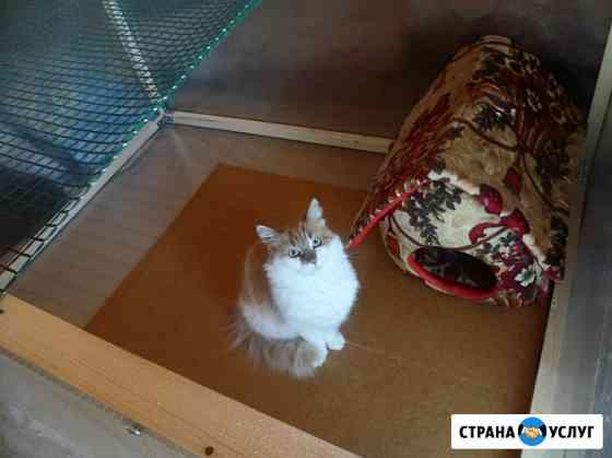 Передержка кошек Москва