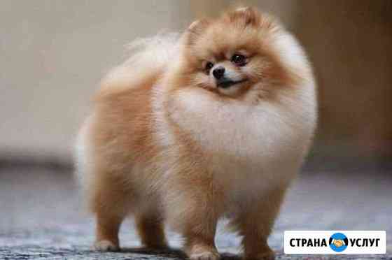 Стрижка собак Иркутск
