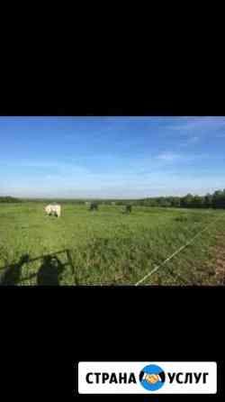 Постой для лошадей Заокский