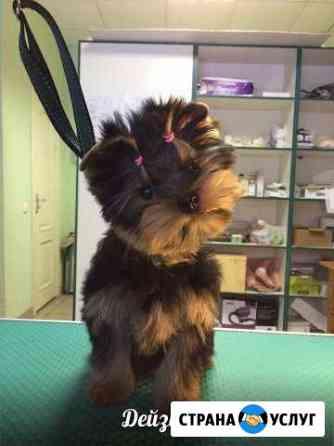 Зоостудия веда стрижка собак, кошек, кроликов Великие Луки