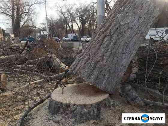 Спил деревьев,обрезка Владикавказ