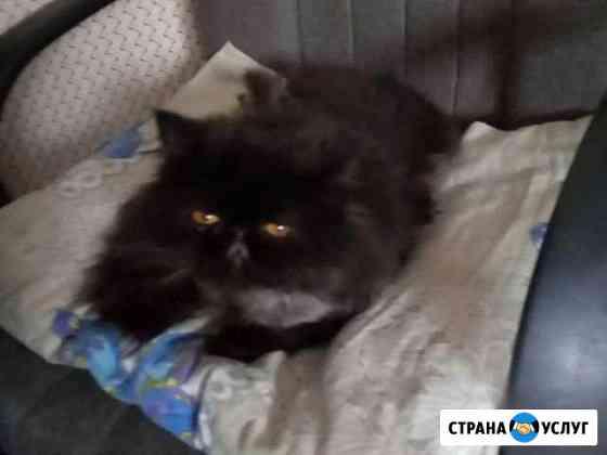 Передержка кошек,котят и котиков Череповец