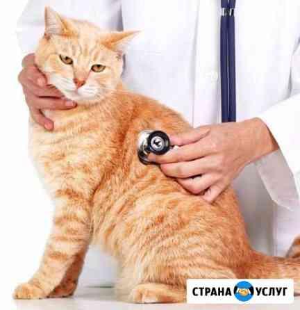 Кастрация кота на дому в любое время Барнаул