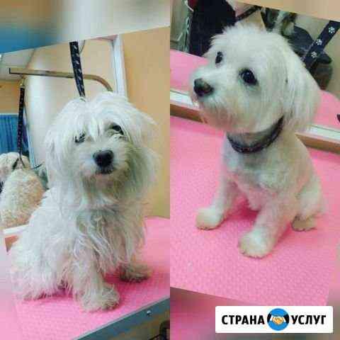 Стрижка собак (груминг) Барнаул