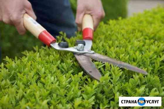 Санитарная и декоративная стрижка растений Кострома