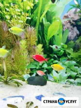 Обслуживание, уборка (чистка) и оформление аквариу Майкоп