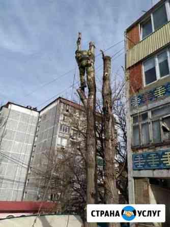 Рубка деревьев Акуша