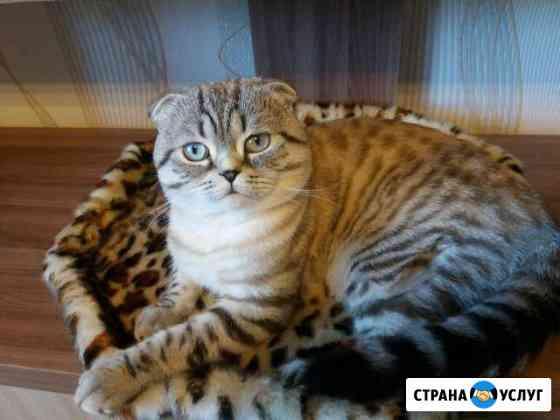 Вязка кота Чебоксары