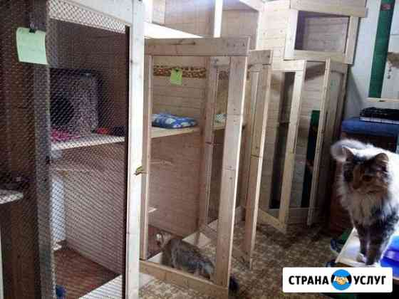 Гостиница для кошек Лабытнанги