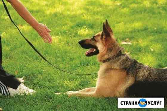 Дрессировка собак и коррекция поведения Симферополь