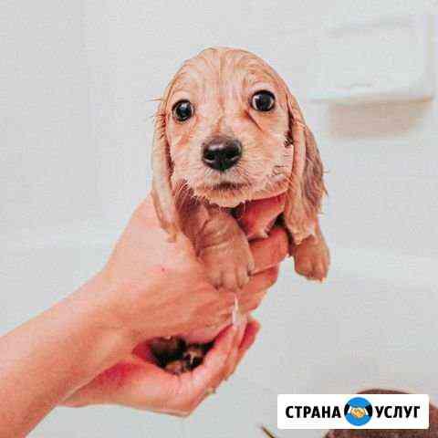 Возьму на передержку собак Владимир