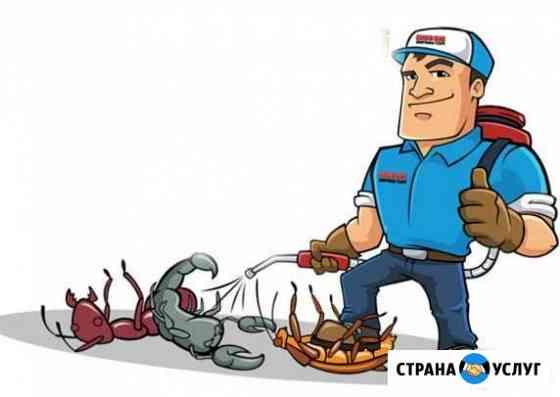 Уничтожение муравьев Новосибирск