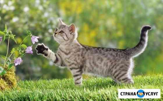 Ветеринарные услуги Хохряки