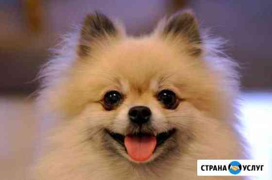 Погуляю с вашей собакой любого размера Красноярск