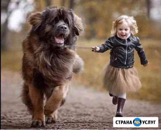 Выгул собаки Мурманск