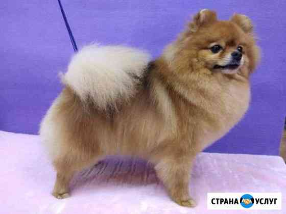 Стрижка собак всех пород Омск