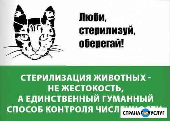 Стерилизация собак и кошек Симферополь