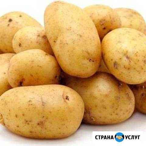 Картофель Моргауши